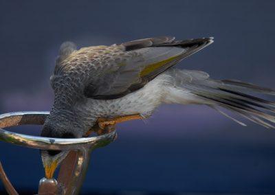 Bird On Bubbler
